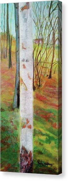 Landscape Silver Birch Canvas Print
