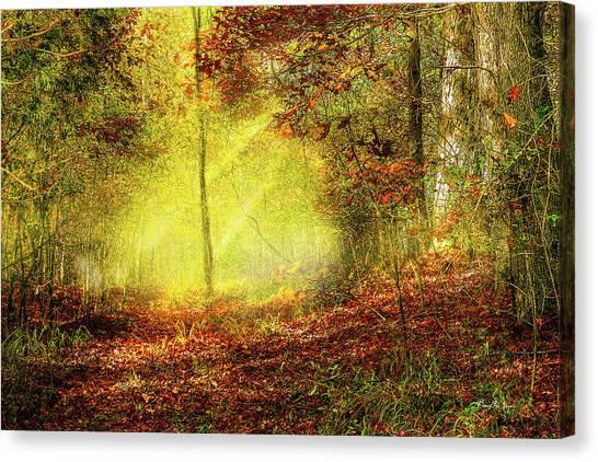 Landscape - Sunbeams - Woodland Trail Canvas Print by Barry Jones