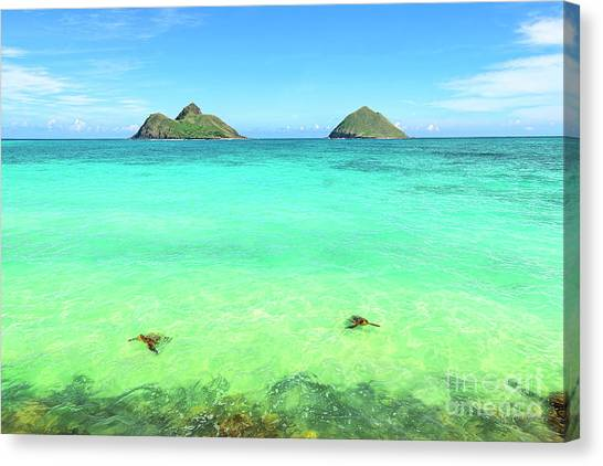 Lanikai Beach Two Sea Turtles And Two Mokes Canvas Print