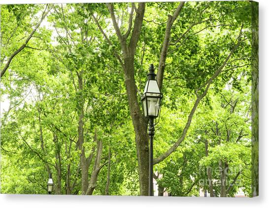 Lanterns Among The Trees Canvas Print