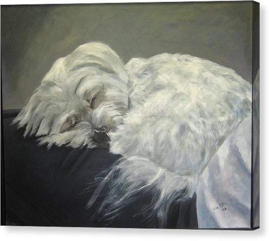 Maltese Canvas Print - Lap Dog by Elizabeth Ellis