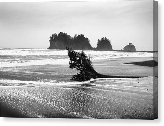Lapush Washington Canvas Print by Todd Fox