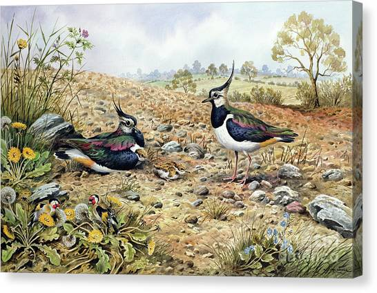 Lapwing Canvas Print - Lapwing Family With Goldfinches by Carl Donner