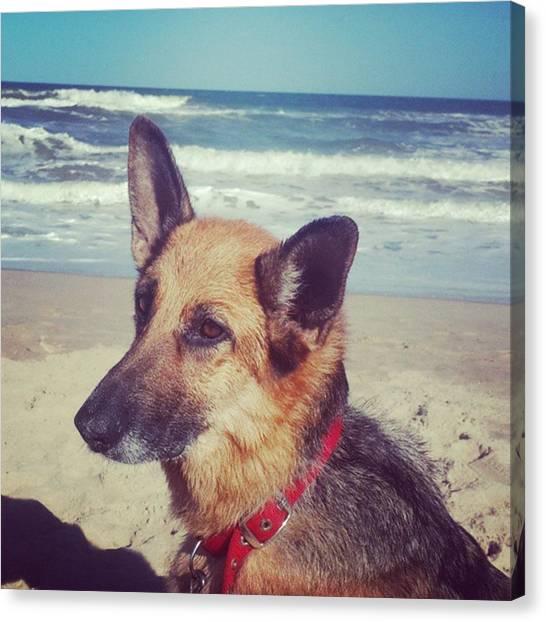 Portal Canvas Print - #lara #dog #beach #lapaloma #sand by Fernando Portal