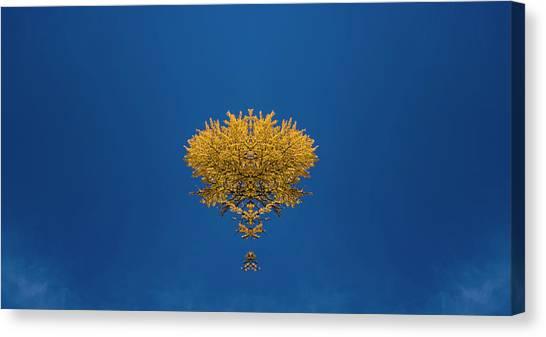 Larch Canvas Print - Larch Kaleidoscope 3 by Pelo Blanco Photo