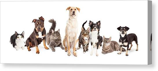Large Group Of Cats And Dogs Together Canvas Print