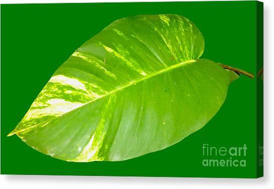 Canvas Print - Large Leaf Art by Francesca Mackenney