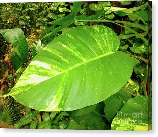 Canvas Print - Large Leaf by Francesca Mackenney