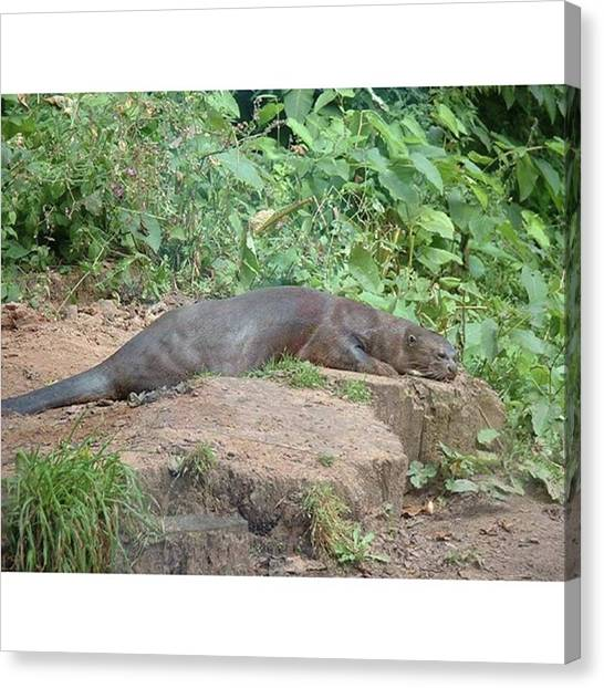 Otters Canvas Print - Large Otter Resting #beautiful by Lisa Bird