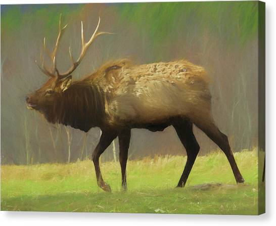 Large Pennsylvania Bull Elk. Canvas Print