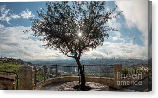 Large Tree Overlooking The City Of Jerusalem Canvas Print