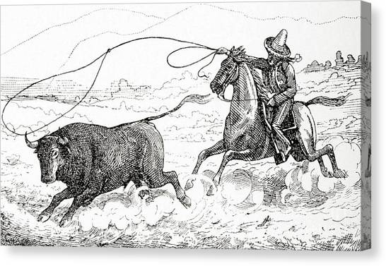 Bull Riding Canvas Print - Lassoing A Bull In South America In The 19th Century by American School