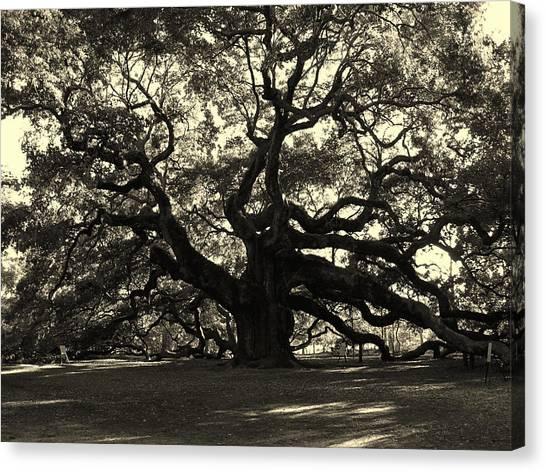 Last Angel Oak 72 Canvas Print