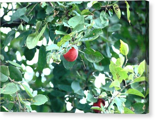 Canvas Print featuring the photograph Last Apple by R B Harper