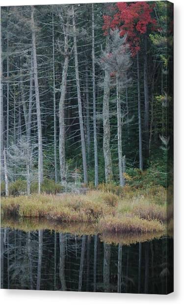 Last Color Canvas Print by William A Lopez