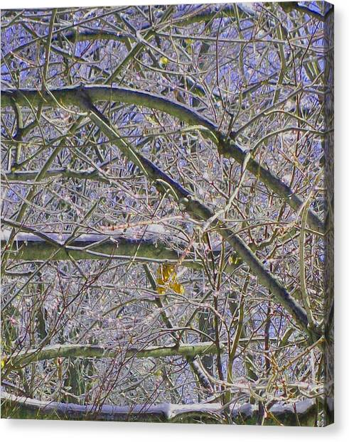 Last Leaf Of Winter Canvas Print by Misty VanPool