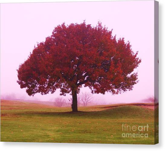 Last Leaf To Fall Canvas Print by Dennis Curry