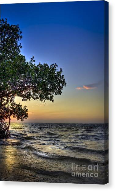 Tampa Bay Rays Canvas Print - Last Light by Marvin Spates