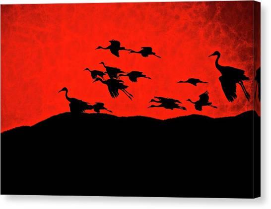Last Light, Sandhill Cranes, Bosque Del Apache, Nm Canvas Print
