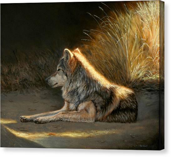 Last Light - Wolf Canvas Print