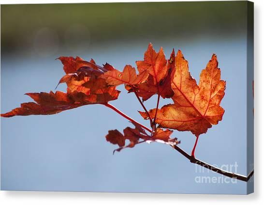 Last Of The Leaves Canvas Print by Joy Bradley