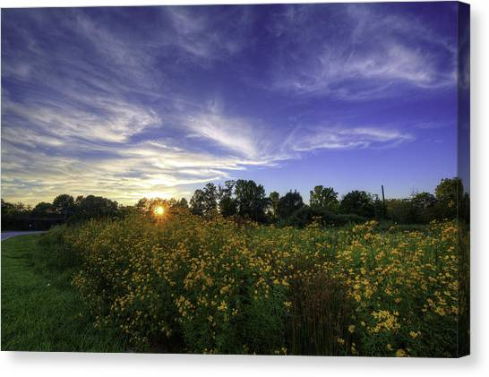 Last Rays Over The Flowers Canvas Print