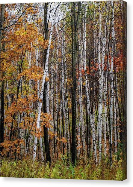 Canvas Print featuring the photograph Last Stand by Kendall McKernon
