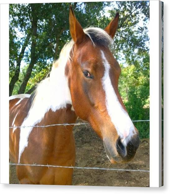 Animals Canvas Print - Last Week, I Met My First #horse! She by Shari Warren