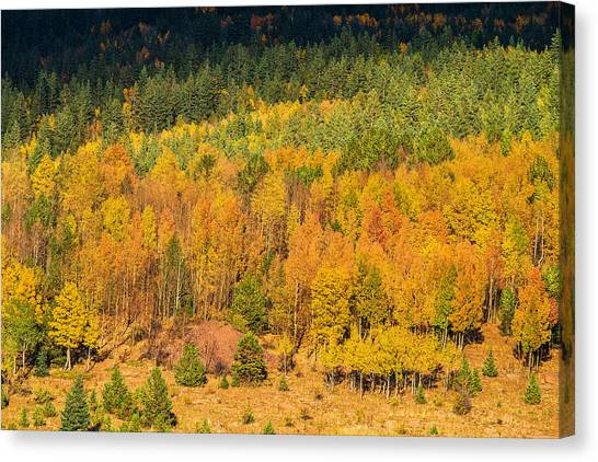 Late Afternoon Gold Canvas Print