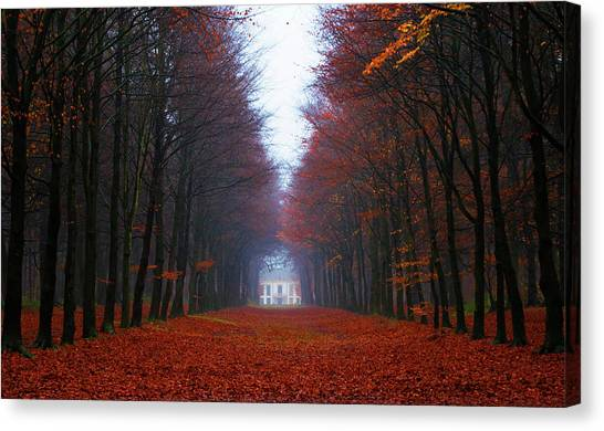 Late Fall Forest Canvas Print