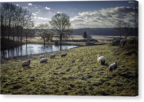Late Fall Pastoral Canvas Print