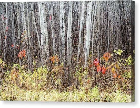 Canvas Print featuring the photograph Late Fall Splendour by Rob Huntley