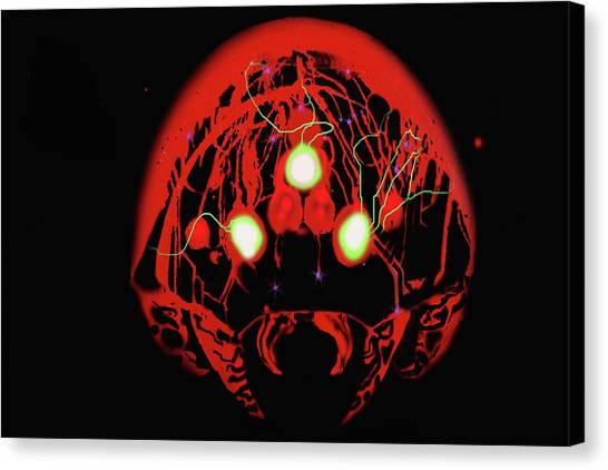 Metroid Canvas Print - Late Night Brain by Alexander Reyes