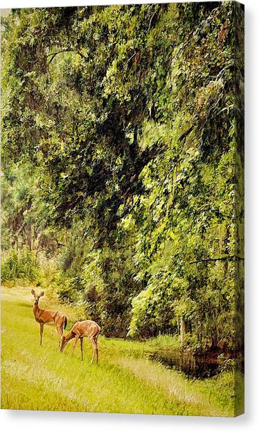 Okefenokee Canvas Print - Late Summer Deer by Jan Amiss Photography