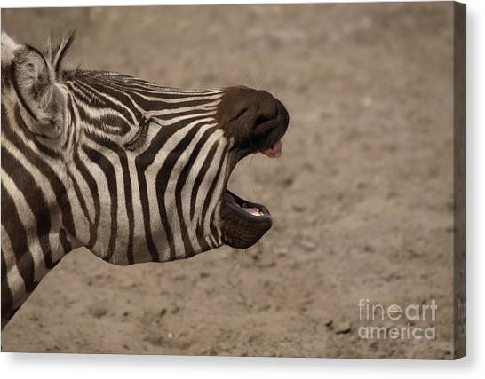 Funny Horses Canvas Print - Laughing by Andreas Berheide