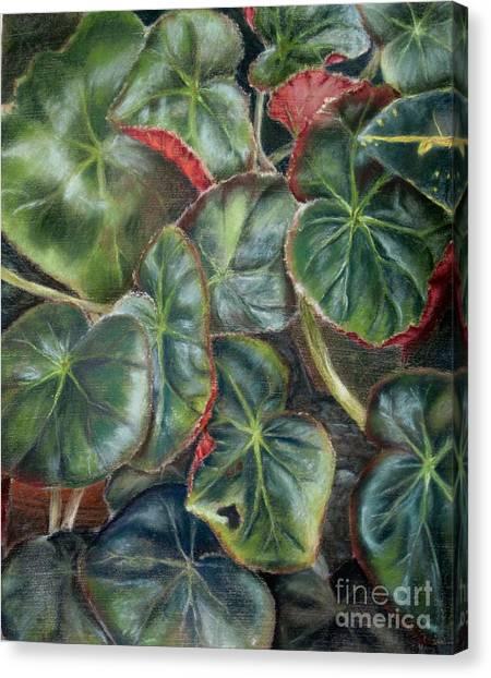 Laura's Begonia Canvas Print by Karen Boudreaux