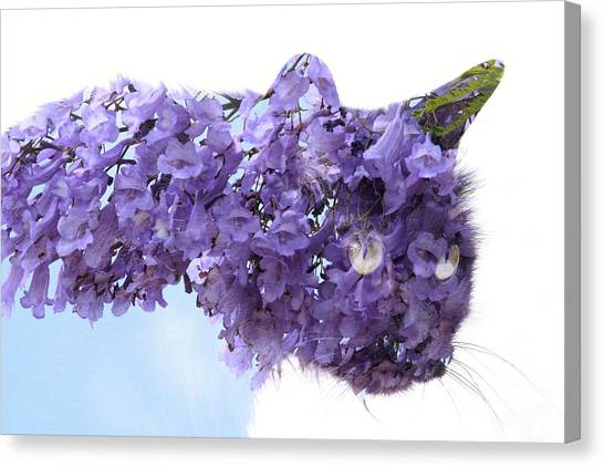 Laurel Kitty Canvas Print