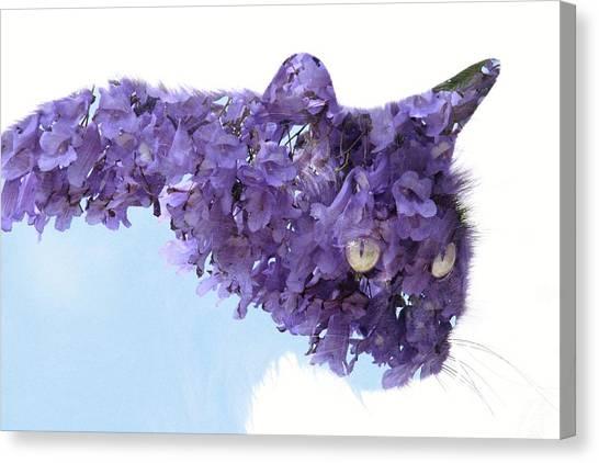 Laurel Tree In Cat Canvas Print