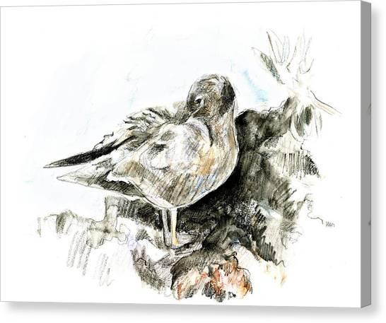 Lava Gull Canvas Print