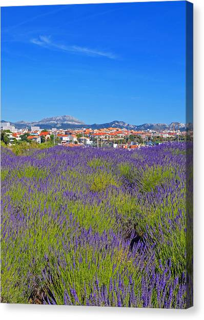 Lavendar Of Provence Canvas Print
