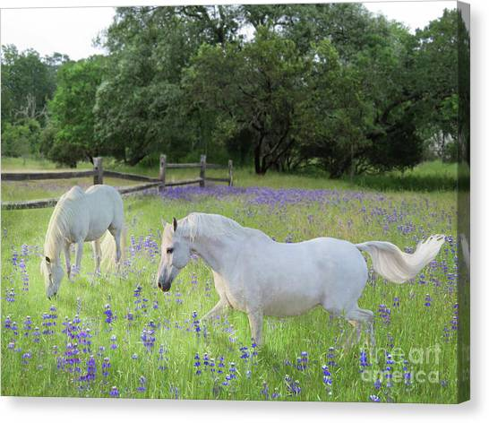Canvas Print featuring the digital art Lavender Pastures by Melinda Hughes-Berland