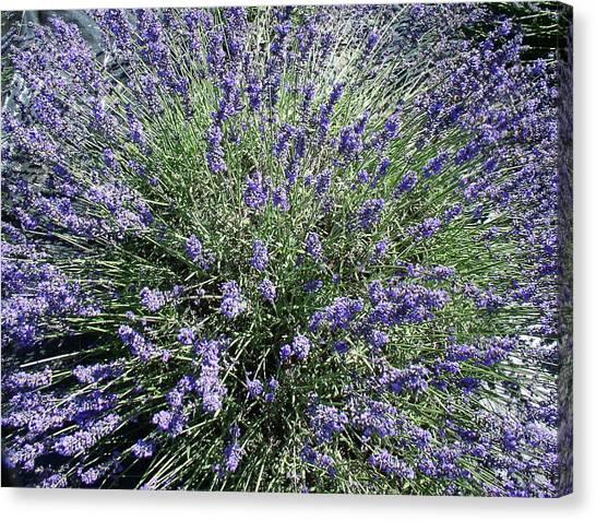 Lavender 2 Canvas Print by Valerie Josi