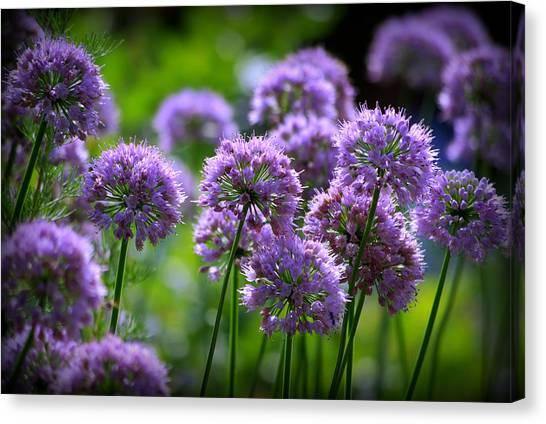 Lavender Breeze Canvas Print
