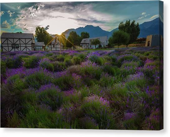 Lavender Delight Canvas Print