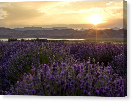 Sunlight Canvas Print - Lavender Glow by Chad Dutson