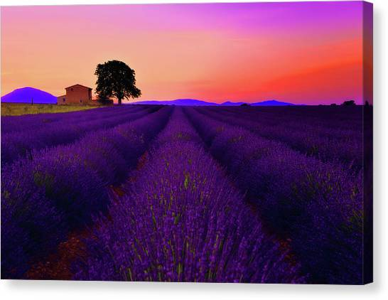 Old Houses Canvas Print - Lavender Home by Midori Chan