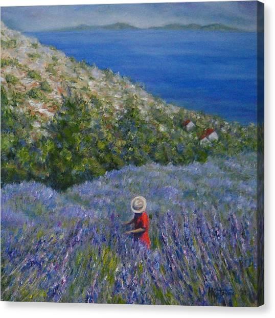 Lavender In Full  Bloom Canvas Print by Mirjana Gotovac