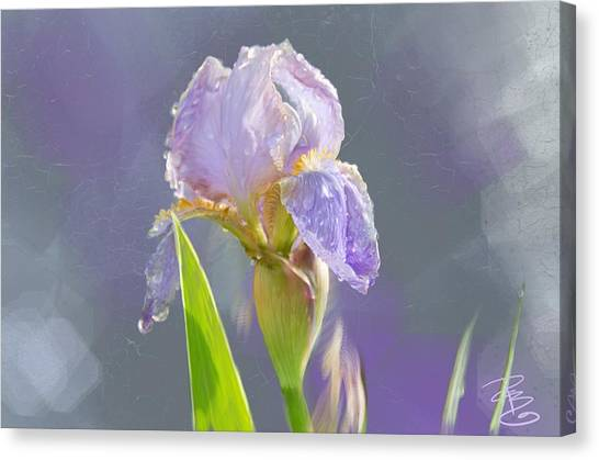 Lavender Iris In The Morning Sun Canvas Print