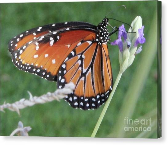 Lavender Lunch Canvas Print