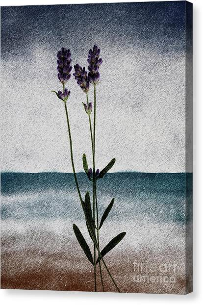 Lavender Ocean Breath Canvas Print
